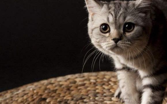 养猫心得:学会如何帮猫咪洗澡
